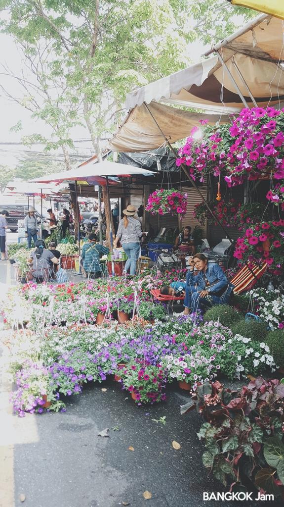 チャトゥチャック 植木市 JJ 水曜 木曜 Plants Flowers Market 2018