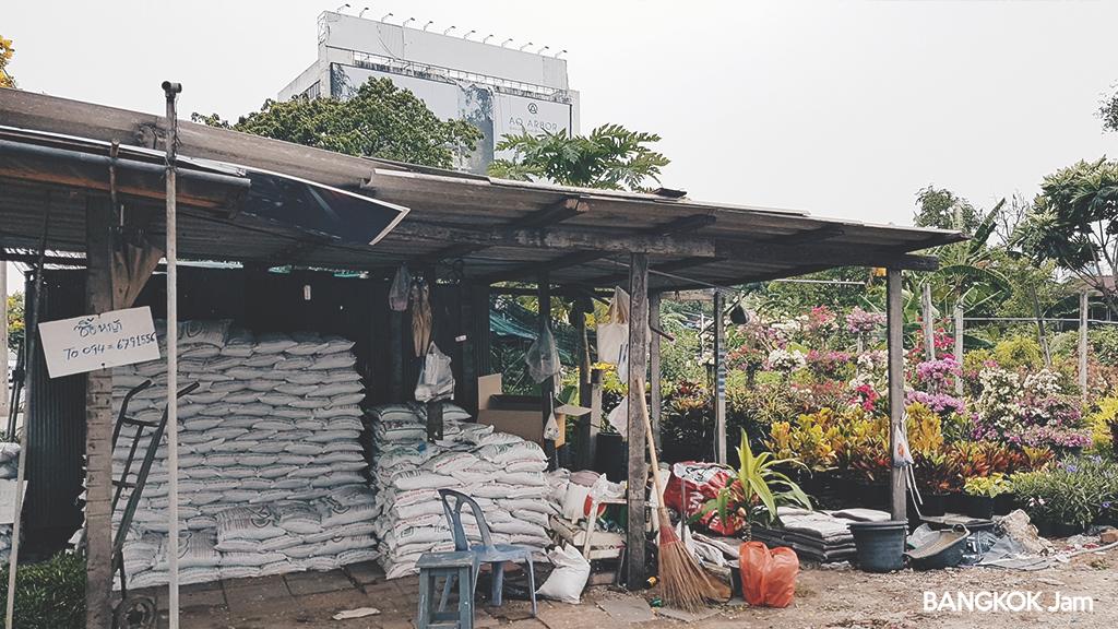 バンコク 植木屋さん 観葉植物 ガーデニング 培養土 植木鉢 シーナカリン Bangkok Plants Shop