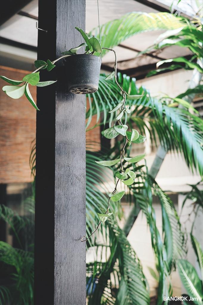 タイ 植木 バンコク 半日陰 日陰 植物