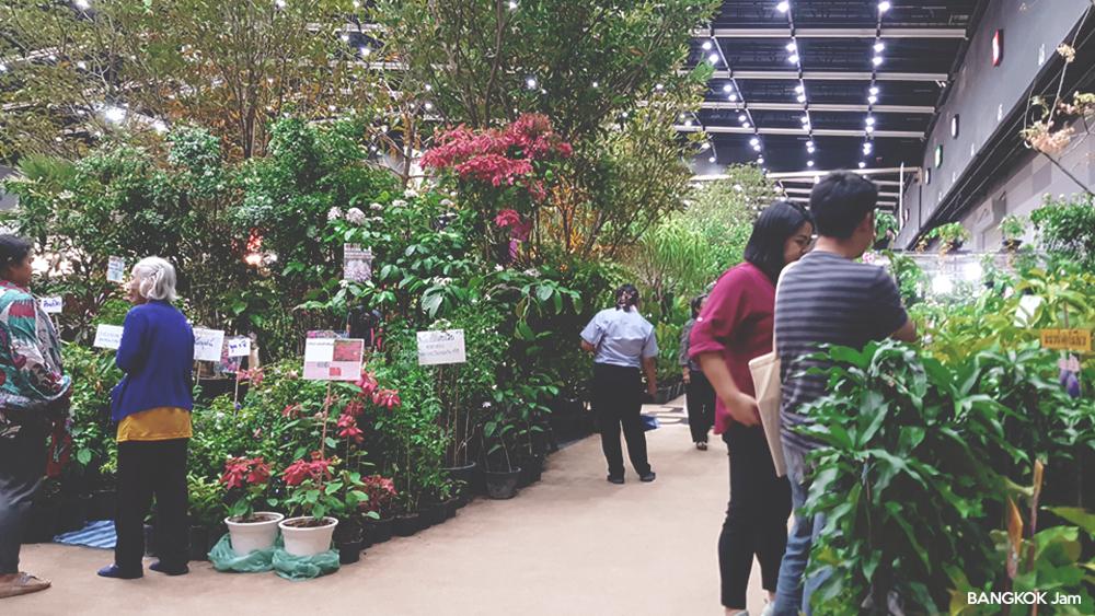 バーン・レ・スアン フェアー Midyear 2018 BITEC Baan Lae Suan Fair 植木 花 植物