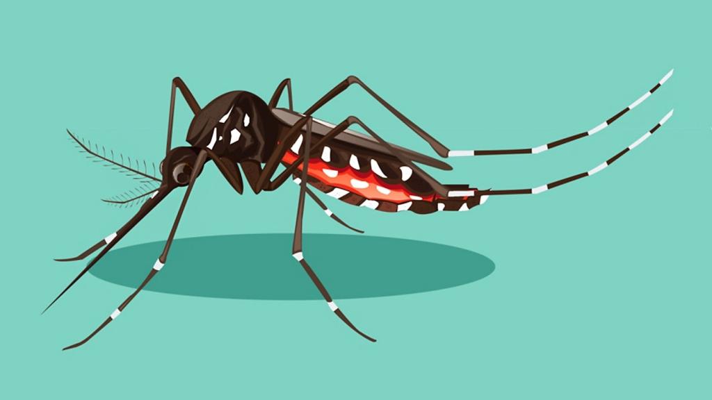 タイ バンコク ジカ熱 ジカウィルス感染症 ニュース 2019ン年 感染