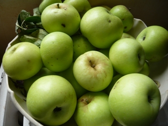 フランスのリンゴ写真