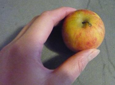 フランスのリンゴRubinette写真