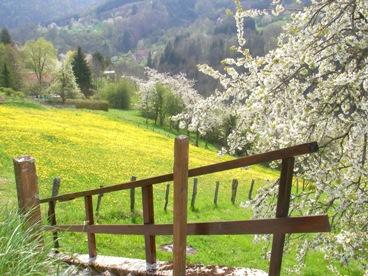 フランスの田舎だより(桜とたんぽぽ)写真