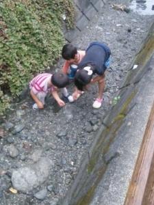 川でカニ探し