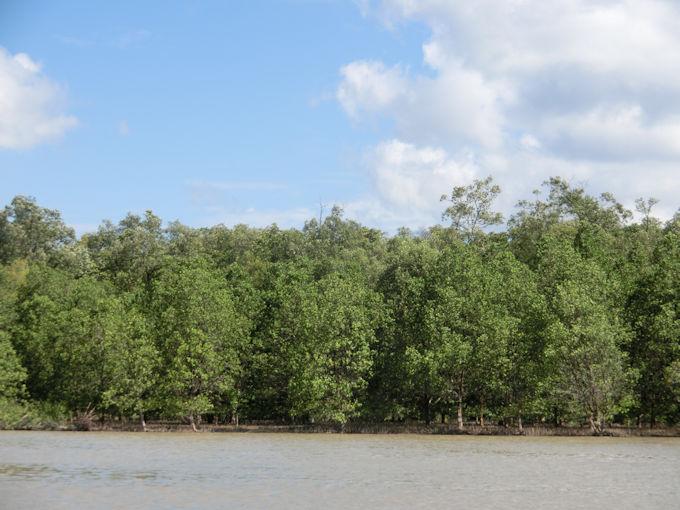 マングローブの森.jpg