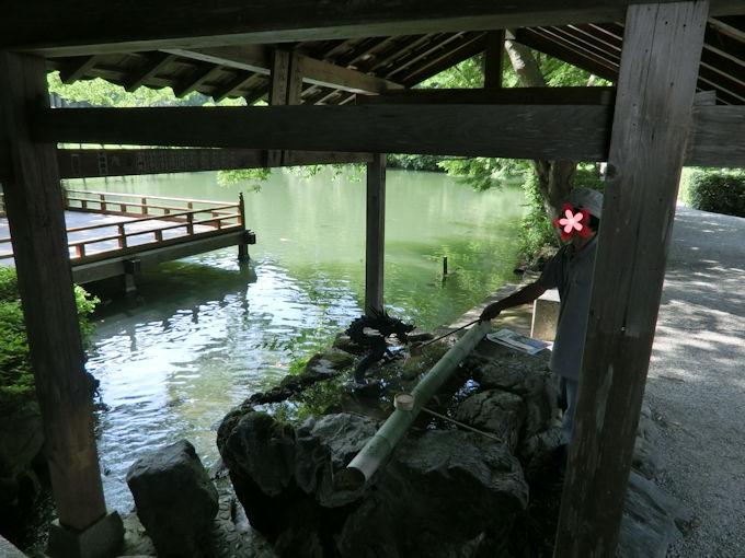 高鴨神社の池.jpg