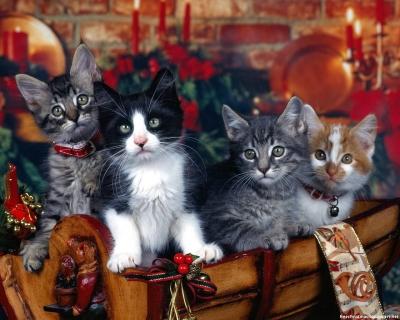 cats-wallpapers-christmas_jpeg.jpg