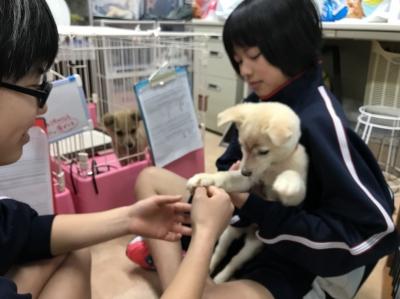 20171225広島市動物管理センター_171225_0024_0.jpg