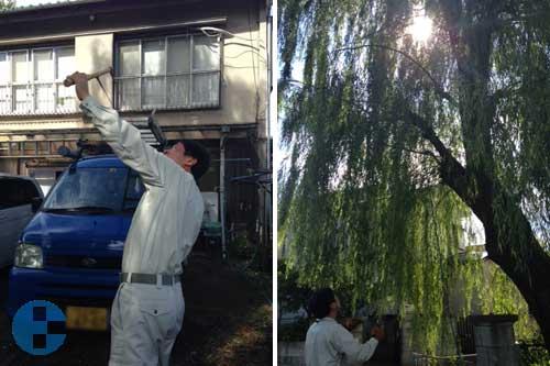 ロープを木に通す作業
