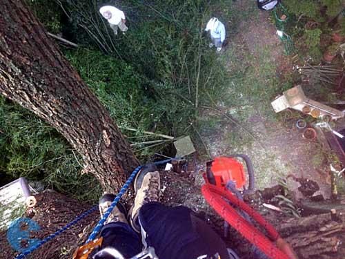 木の上からみた様子