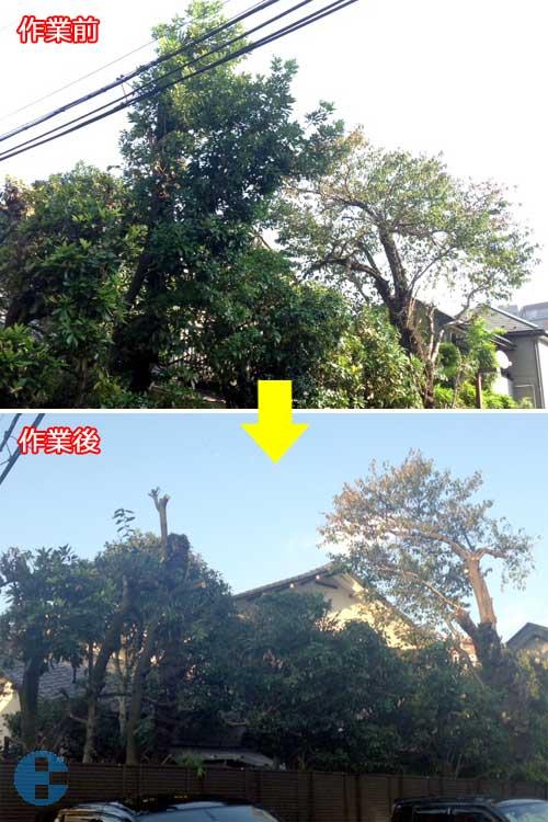 枝おろしビフォーアフター