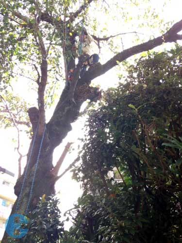 枝の吊り下ろし