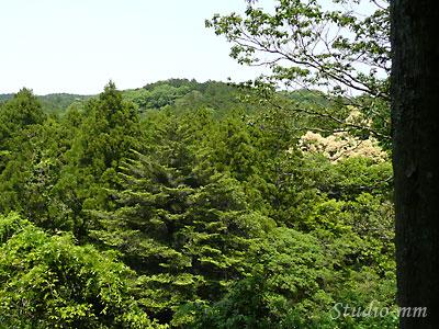 朝熊山の木々