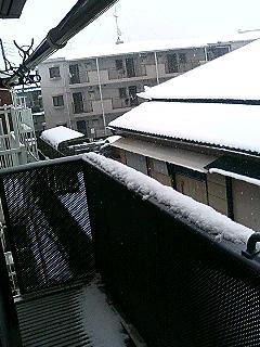 ふくちゃん:雪