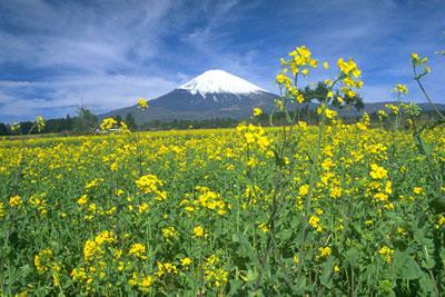 ふくちゃん:富士山
