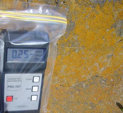 黄色い花粉 放射線 表面測定