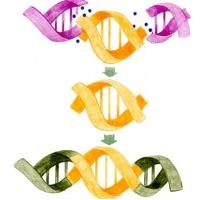 テスラ・プレート</a>は 遺伝子組み換えの食品を 元のオリジナルの状態に戻す