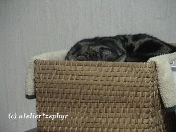 猫が籠の中で寝ている