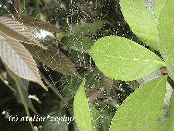 クロガケジグモのぼろ網