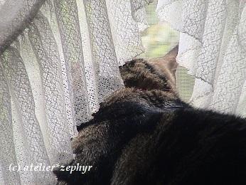 窓辺で外を見る猫の後ろ姿