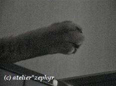 猫の後ろ足