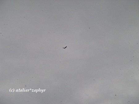 雪の日に飛ぶ鳥