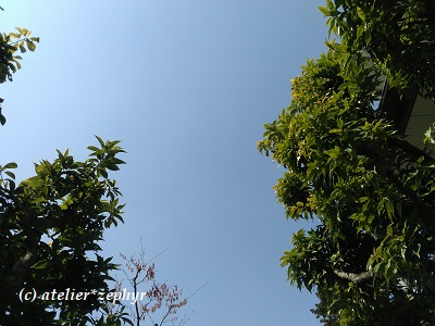 木々の茂みと空