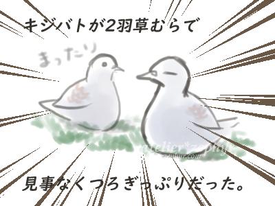 キジバトマンガその2 座ってくつろぐ2羽のキジバト