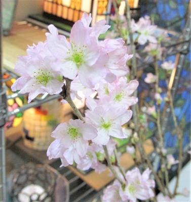 桜 ステンドグラス教室