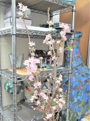 ステンドグラス教室 桜 啓翁桜