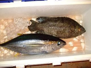 マグロと鯛