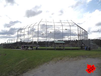 留学生とスポーツ 野球 05