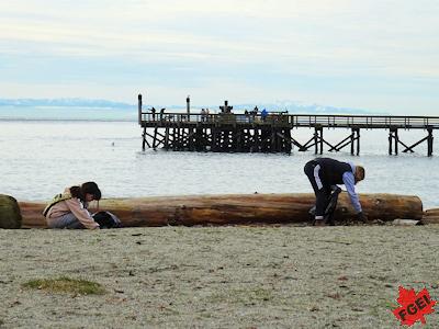 海岸でゴミ拾いする高校生たち