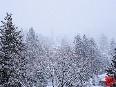 雪景色 バンクーバー