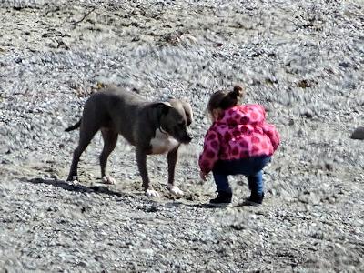 犬と相撲を取る子供