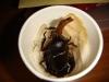 カブトムシの羽化(7)