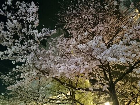 H28.04:桜 007