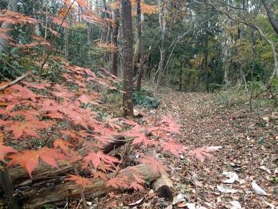 ひがしね古墳の森林