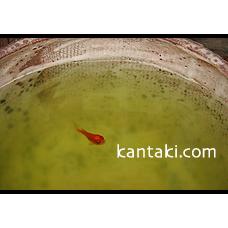 kantaki.com