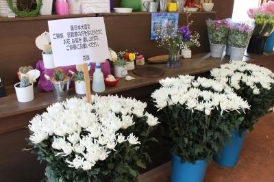 震災 豊間 薄磯 いわき市 小名浜 花国湘南台店