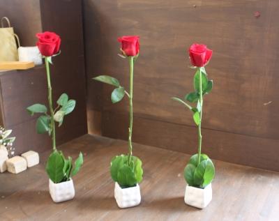お祝い花 お店オープン 開店祝い いわき市 小名浜の花屋 花国湘南台店
