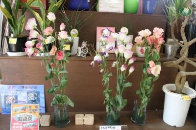 切花 日持ちテスト トルコキキョウ いわき市 小名浜の花屋 花国湘南台店