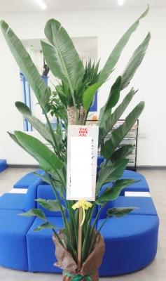 お祝い スタンド花 開店祝い観葉植物 いわき市小名浜の花屋 花国湘南台店