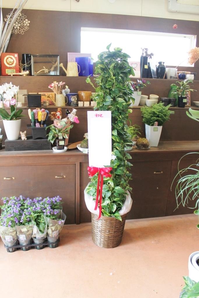 観葉植物、お祝い花、スタンド花、開店祝い、いわき市小名浜の花屋,花国湘南台店