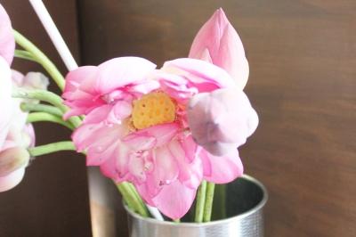 お盆、蓮の花、いわき市小名浜の花屋,花国湘南台店
