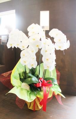 おいわい花、いわき市小名浜の花屋,花国湘南台店