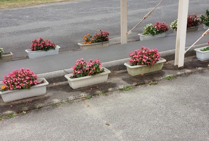 花復興プロジェクト、いわき市,小名浜,花屋,花国湘南台店