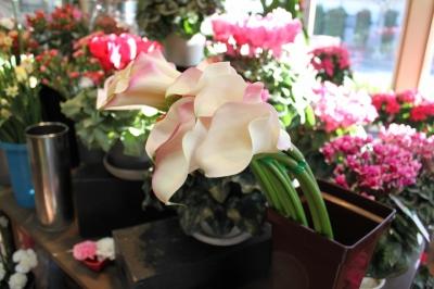 花、 花屋、切り花、鉢物、いわき市,小名浜,花屋,花国湘南台店