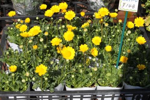 観葉植物、ガーデニング、いわき市,小名浜,花屋,花国湘南台店